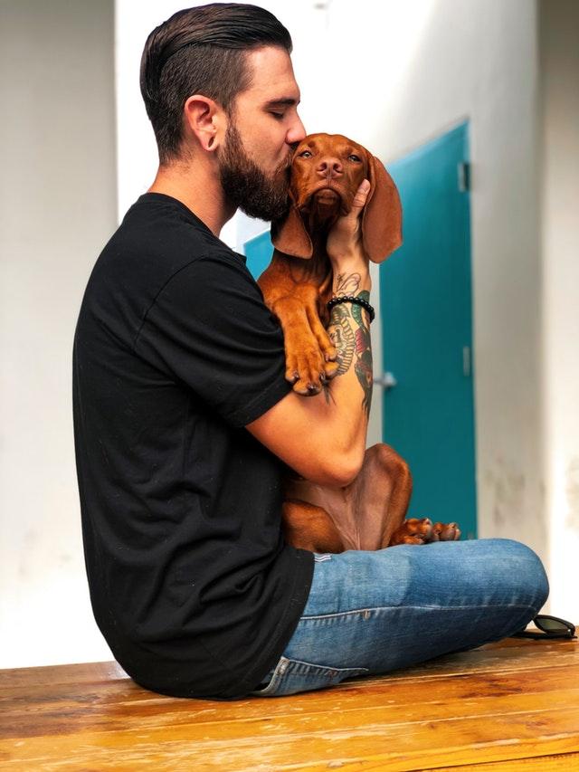 Det bedste forsikringselskab til en hundeforsikring